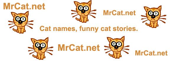 M Cat Names Cat Names That ...